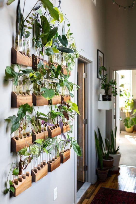 test tube wall garden