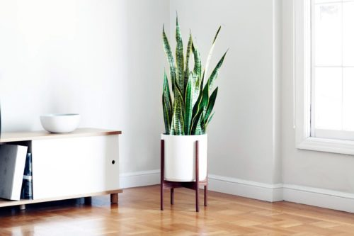 decorate small spaces with plants snake plant
