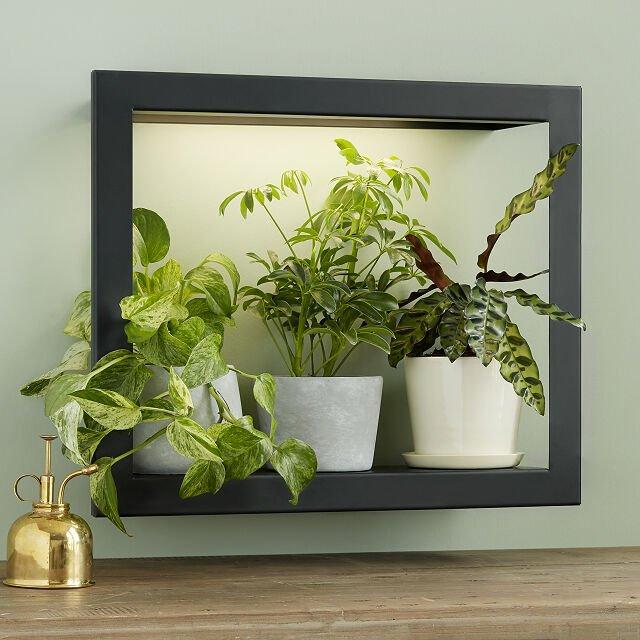 grow light wall shelf for indoor plants